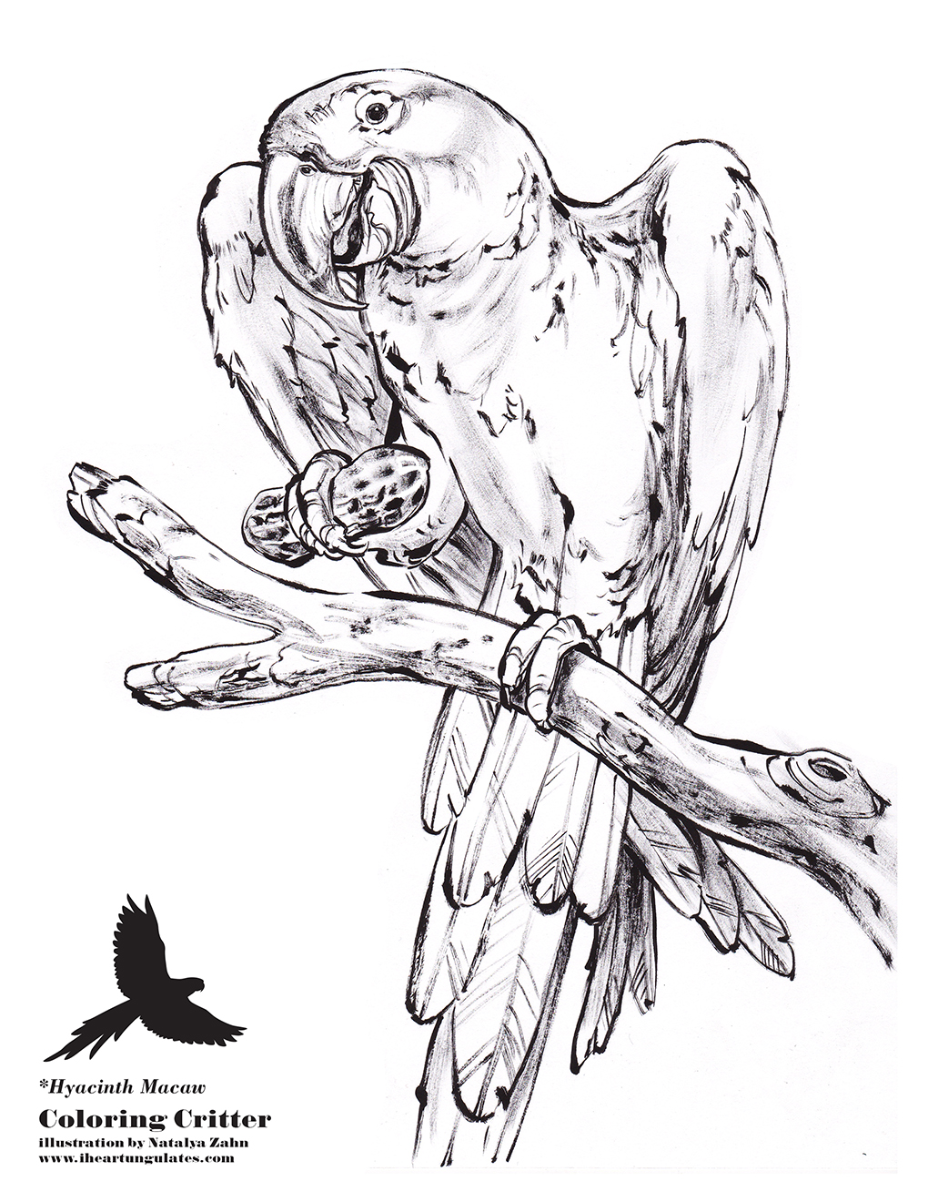 Flying Macaw Coloring Page a Note to my Few Dear